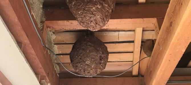 【スタッフブログ】スズメバチの巣が出てきました